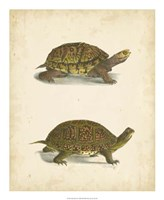 Turtle Duo III Fine Art Print