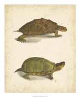Turtle Duo IV Fine Art Print