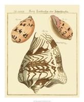 Antique Martini Shells II Fine Art Print