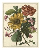 Floral Posy I Framed Print