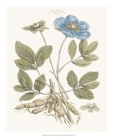 Bashful Blue Florals I Fine Art Print