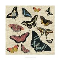 Butterflies & Linen II Framed Print
