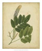 Botanical III Fine Art Print