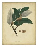Botanical VIII Fine Art Print