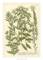 Weinmann's Garden V Fine Art Print