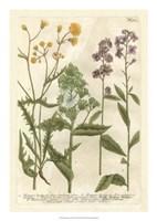 Weinmann's Garden VI Fine Art Print