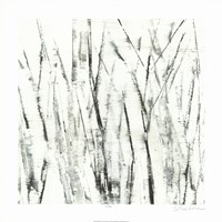 Birches I Fine Art Print