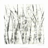 Birches II Fine Art Print
