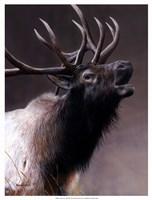 American Icon- Elk Fine Art Print