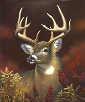 Deer Portrait Fine Art Print