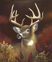 Deer Portrait Fine Art Print