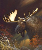 Moose Portrait Fine Art Print