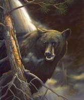 Bear Portrait Fine Art Print