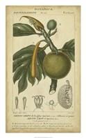 Exotic Botanica IV Fine Art Print