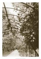 Royal Botanical Garden, Madrid Fine Art Print