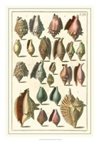 Shell Collection III Fine Art Print