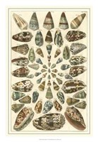 Shell Collection V Fine Art Print
