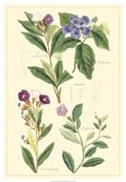 Botanical I Fine Art Print