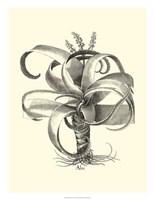 B&W Besler Aloe Fine Art Print