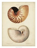 Antique Nautilus I Fine Art Print