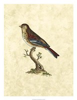 Birds IV Fine Art Print