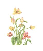 Tulip Spray II Fine Art Print