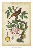 Antique Bird in Nature I Fine Art Print
