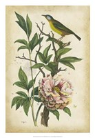 Antique Bird in Nature II Fine Art Print
