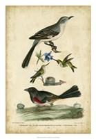 Wilson's Mockingbird Fine Art Print
