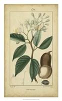 Vintage Turpin Botanical I Fine Art Print