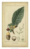 Vintage Turpin Botanical IV Fine Art Print