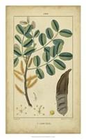 Vintage Turpin Botanical VII Fine Art Print