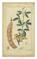 Vintage Turpin Botanical VIII Fine Art Print