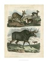 Deer & Moose Fine Art Print