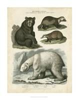 Brown Bear & Polar Bear Fine Art Print