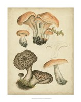 Antique Mushrooms I Fine Art Print