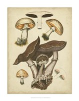 Antique Mushrooms II Fine Art Print