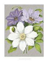 Clematis Blooms II Fine Art Print