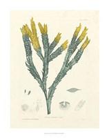 Luminous Seaweed I Fine Art Print