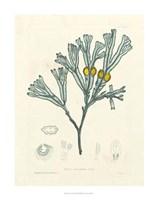Luminous Seaweed II Fine Art Print