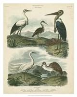 Heron & Crane Species I Fine Art Print