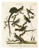 Ornithology I Fine Art Print