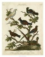 Ornithology II Fine Art Print