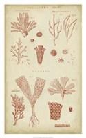Coralline I Fine Art Print