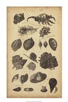 Study of Shells I Fine Art Print