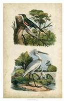 Avian Sanctuary I Fine Art Print