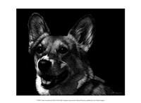 Canine Scratchboard XXIX Fine Art Print
