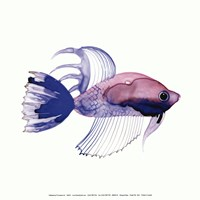 Purple Fish Fine Art Print