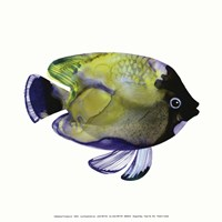 Green Fish Fine Art Print
