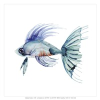 Teal Fish Fine Art Print